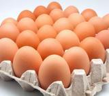 Huevos frescos..Mayoreo!!!