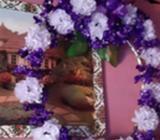 Se Venden Flores