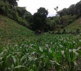 Terreno con vocación agrícola
